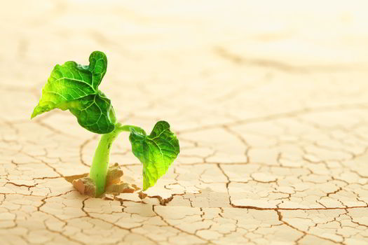 Take Root In Dry Ground